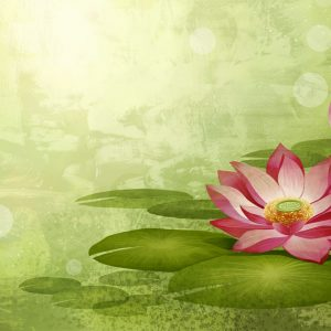 lotus-flowers-amazing-widecreen-hd-wallpapers-in-high-resolution