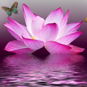 pink butterfly lotus